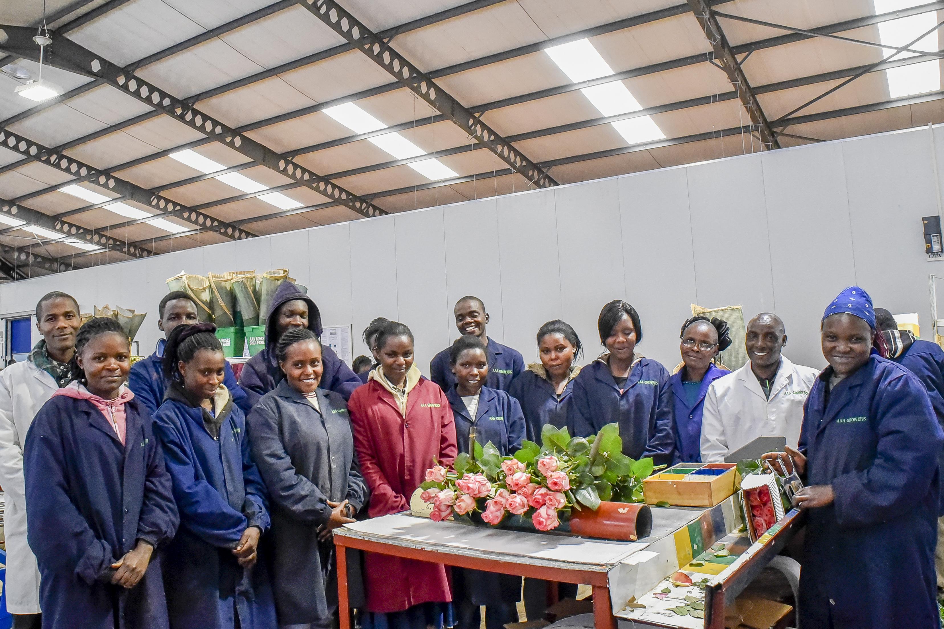 Staff of Bellissima roses