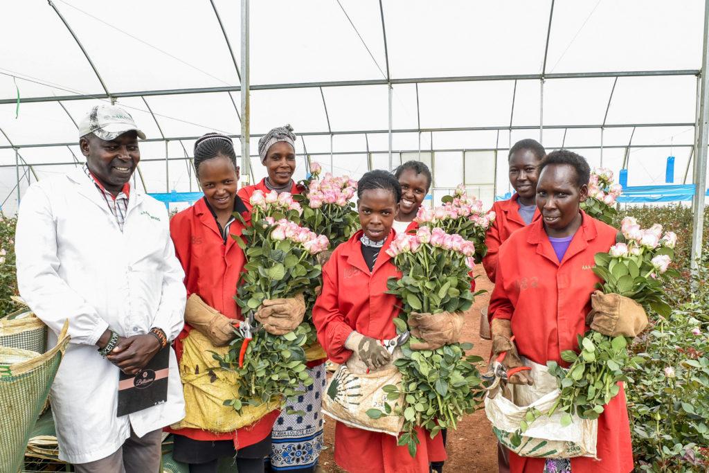 Female workers harvesting roses in Kenya