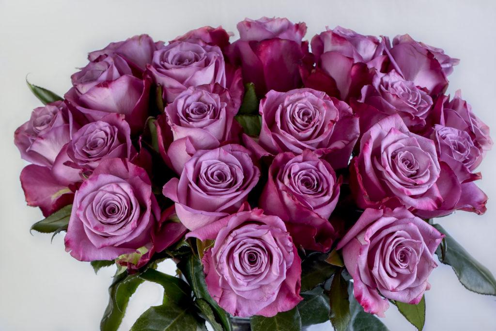 Kenyan premium rose flower